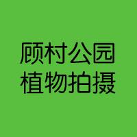 20130512顾村公园植物拍摄