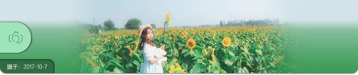 阳光·向日葵·少女