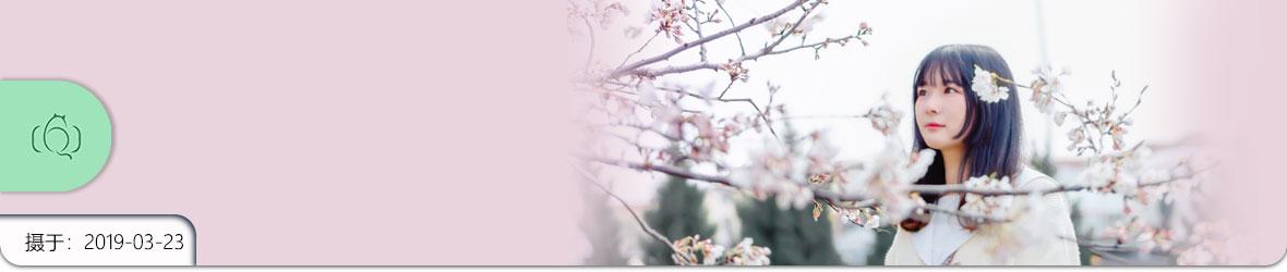 想和你在樱花树下相遇